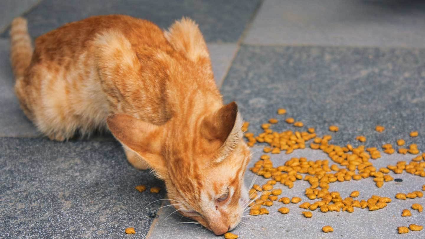 Get-Most-Excellent-Food-for-Your-Cat-Right-Now-on-99insight