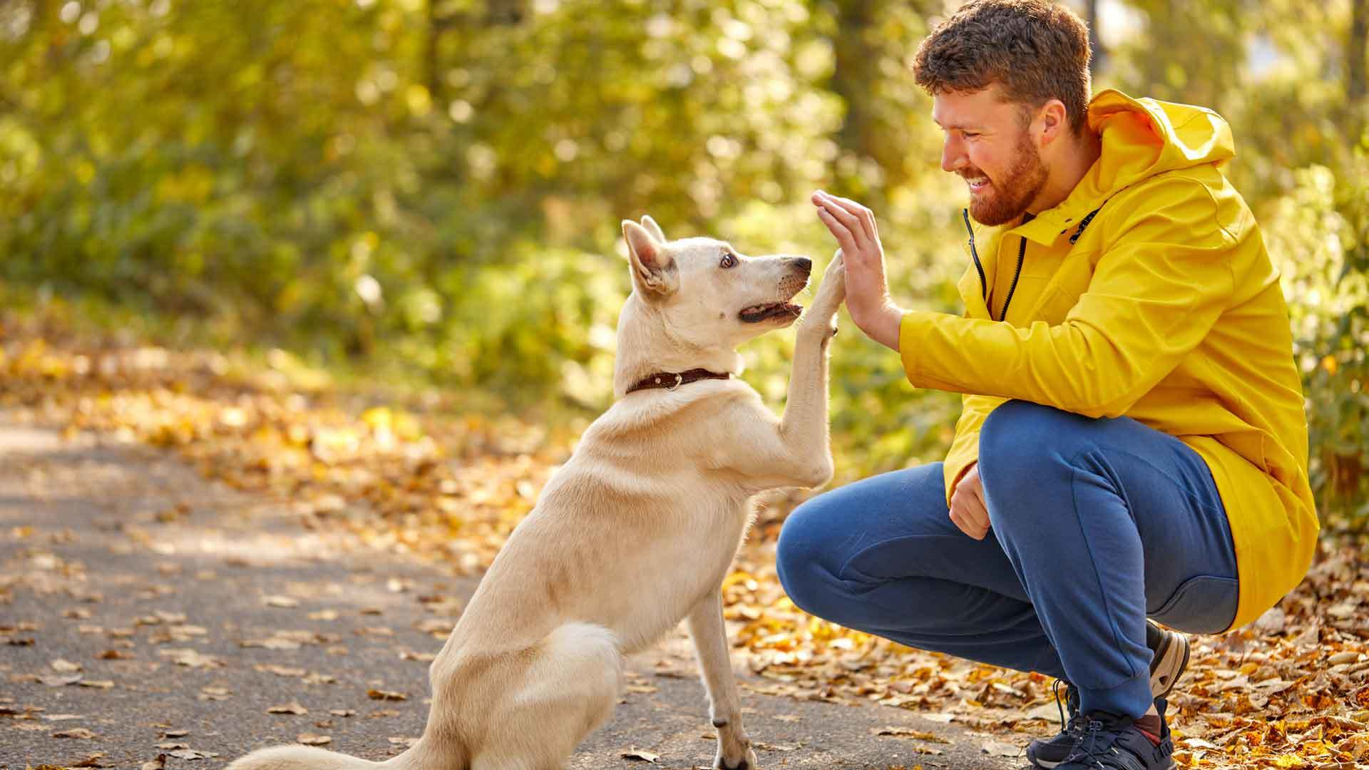 Tips-for-Taking-Care-of-Your-Dog-on-99insight